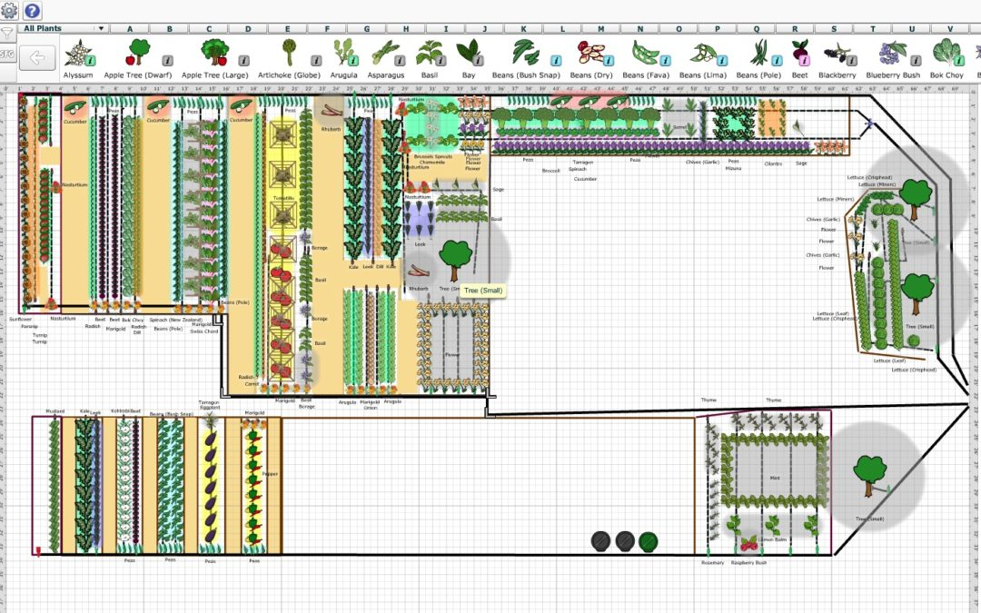 Vegetable Garden Planning – Simple Steps To Making A Successful Vegetable Garden Plan